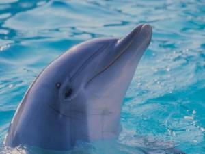 Delfín asomando la cabeza