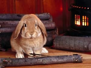 Postal: Un conejo junto a la estufa de leña
