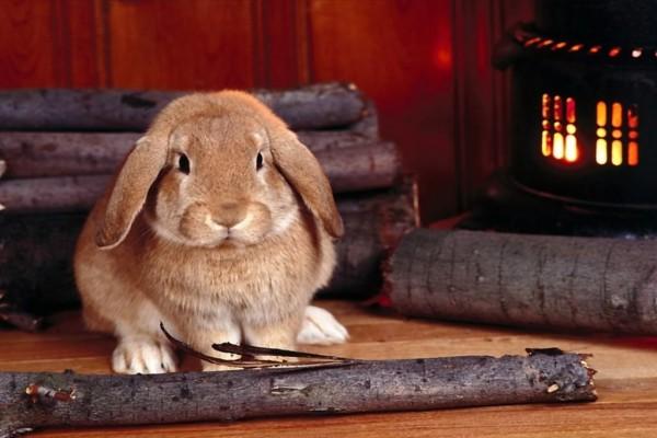 Un conejo junto a la estufa de leña