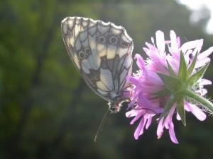 Postal: Mariposa sobre una flor rosa