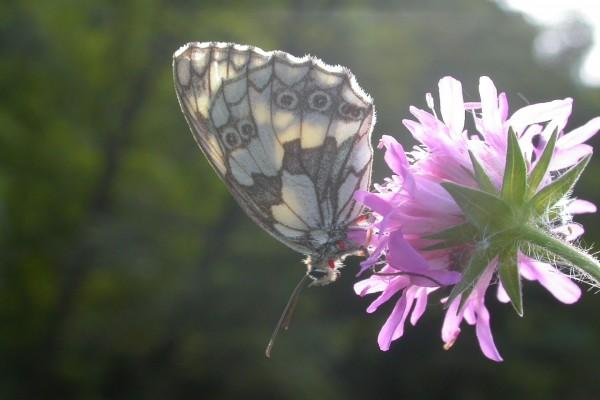 Mariposa sobre una flor rosa