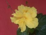 Flor amarilla sobre un fondo rojo