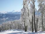 Árboles nevados