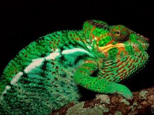 Camaleón de tonos verdes