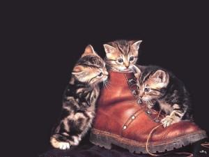 Postal: Gatitos jugando con una bota