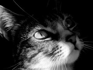 Postal: Gato entre sombras