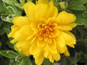 Postal: Hermosa flor de pétalos amarillos