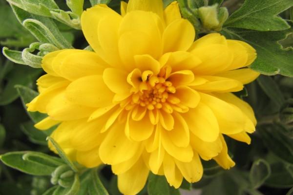 Hermosa flor de pétalos amarillos