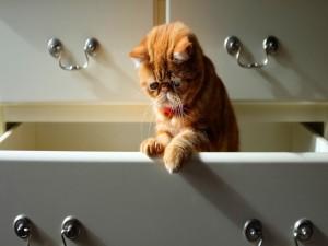 Postal: Gato en un cajón