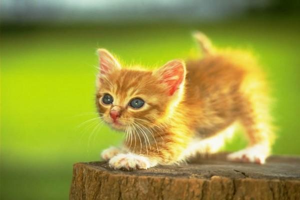 Gatito a punto de saltar