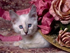 Gatito bajo un elegante sombrero