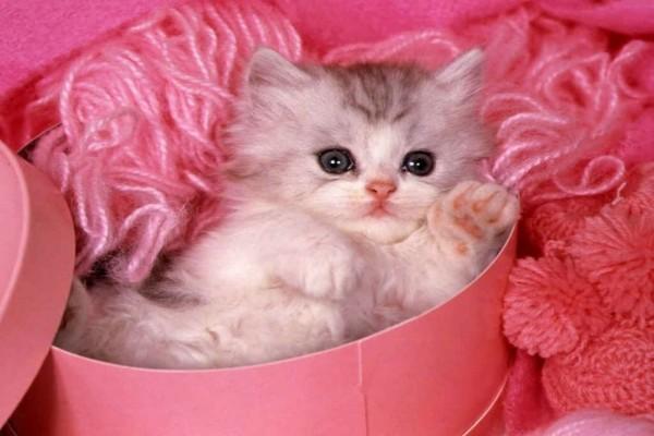 Gatito entre ovillos de lana rosa