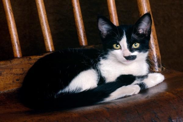 Gatito en una silla de madera