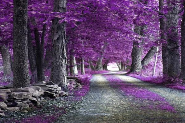 Camino lleno de hojas de color lila