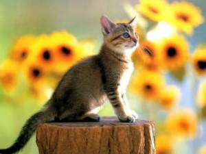 Postal: Gatito posando sobre un tronco