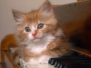 Postal: Gatito tumbado sobre un teclado de piano