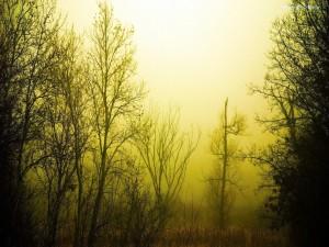 Postal: Niebla entre árboles sin hojas