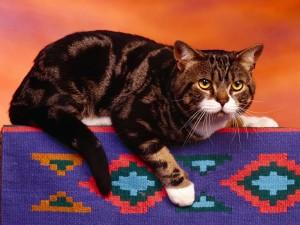 Gato sobre una alfombra