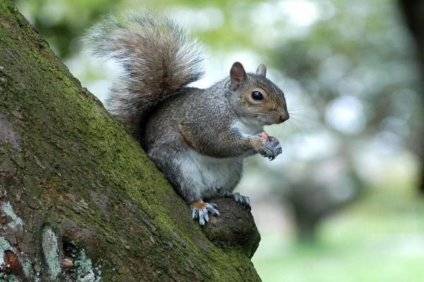 Ardilla en el tronco de un árbol