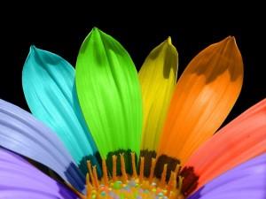 Pétalos de colores