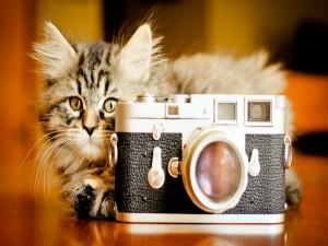 Gato fotógrafo