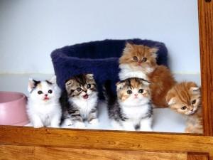 Gatitos asomados