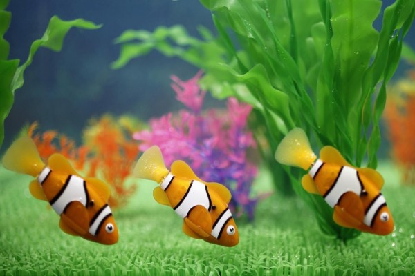 Pecera con peces payaso decorativos