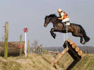 Caballo y jinete en una carrera de obstáculos