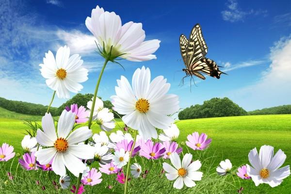 Mariposa cerca de unas margaritas
