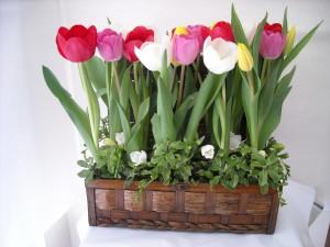 Postal: Cesta de tulipanes