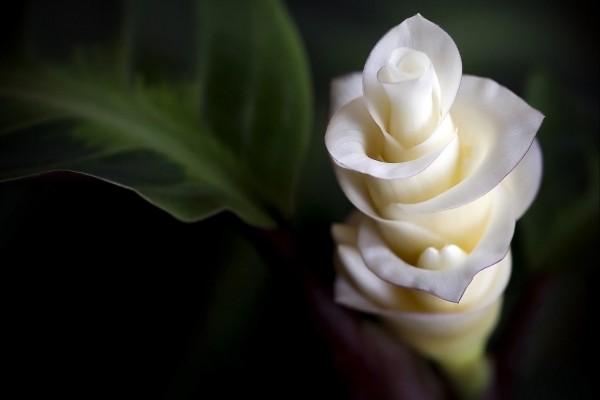 Una elegante flor blanca