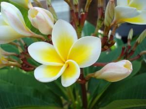 Postal: Rama con florecillas de tonos amarillos
