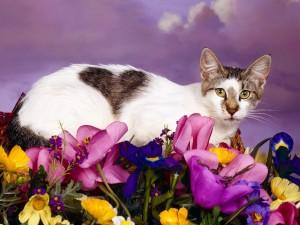 Gato sobre flores