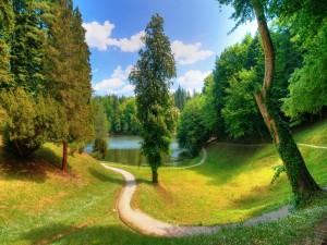 Postal: Camino hacia el lago entre árboles verdes