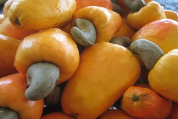 Frutos y semillas de anacardium