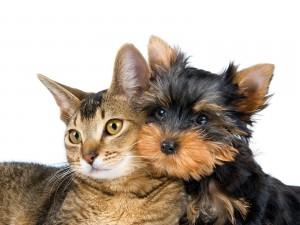 Postal: Amistad entre un perro y un gato