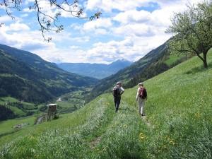 "Postal: Senderismo por el camino ""Meraner Höhenweg"", al sur del Tirol"