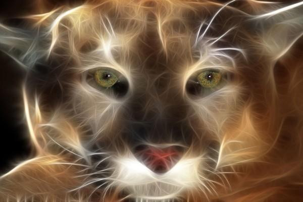 Trazos felinos