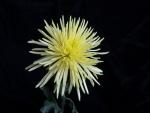 Una delicada flor amarilla
