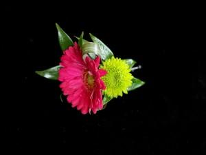 Postal: Pequeñas flores rosa y amarilla
