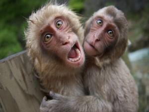 Postal: Monos chistosos