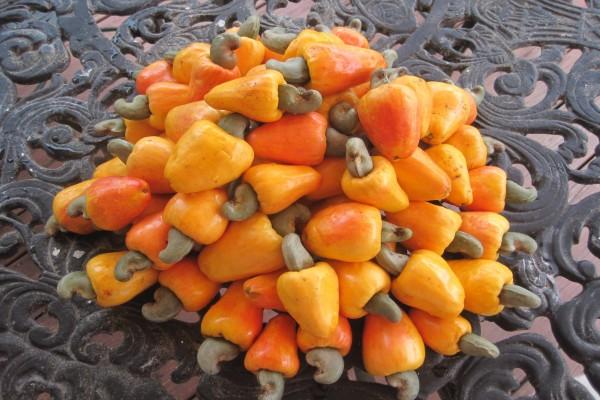 Anacardos en su fruto