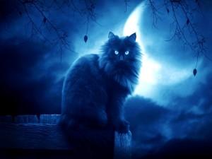 Gato con la luna