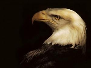 Postal: Águila