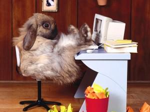 Conejito en su escritorio