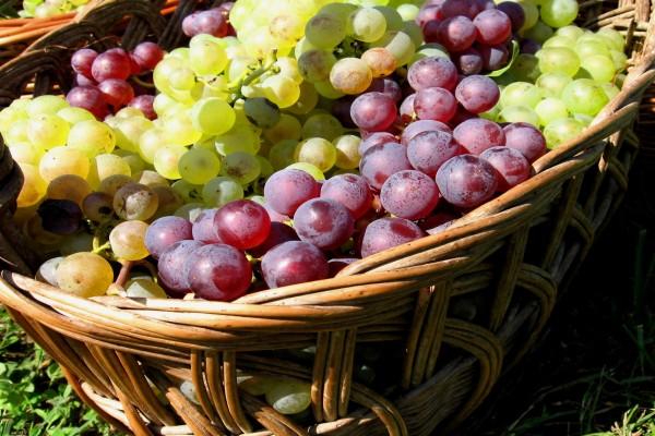 Cesta con uvas blancas y tintas