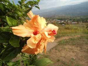 Flor solitaria