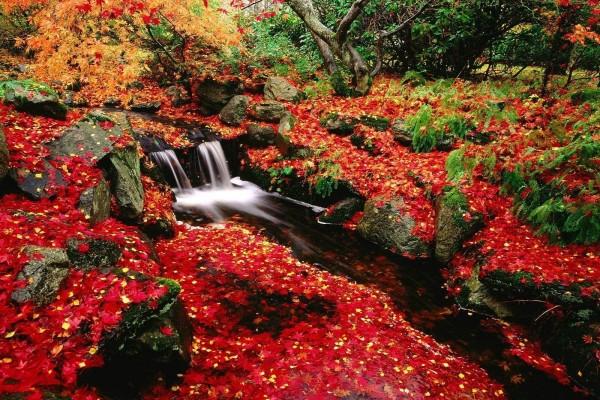 Cascadas en otoño