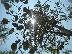 Rayos de luz entre las hojas