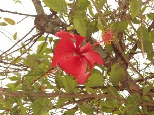 Postal: Flor roja solitaria